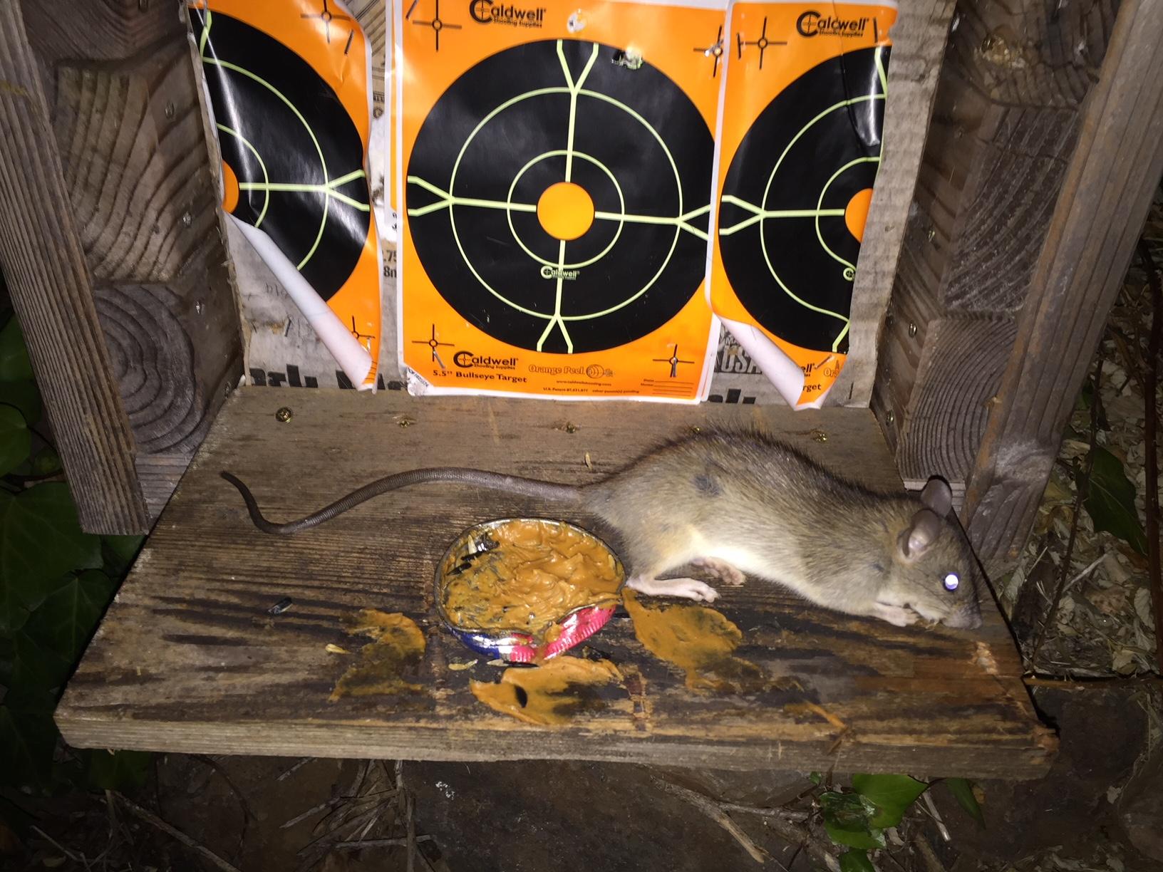 Rat Killing Station For Airguns Archer Air Rifles